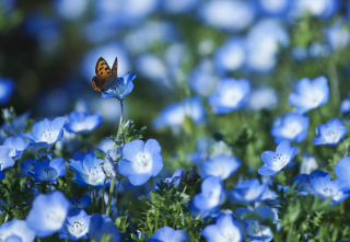 Butterfly And Blue Field Flowers Picture for Desktop Netbook 1024x600