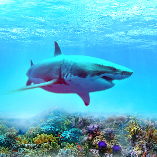Great white shark sfondi gratuiti per 1024x1024