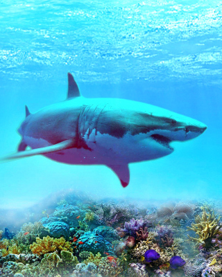 Great white shark Background for HTC Titan