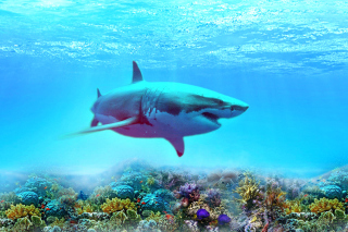 Great white shark Background for Samsung P1000 Galaxy Tab