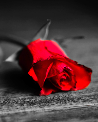 Red Rose On Wooden Surface - Fondos de pantalla gratis para Samsung Dash