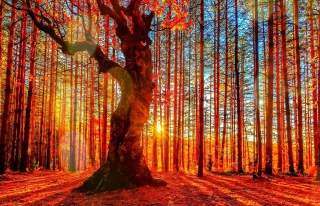 Forest Autumn Sunset Background for Android, iPhone and iPad