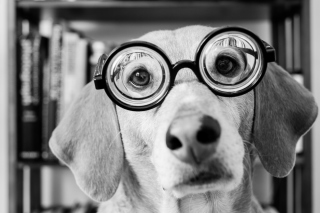 Kostenloses Funny Dog Wearing Glasses Wallpaper für Android, iPhone und iPad