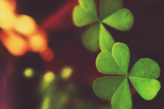 Clover Wallpaper for Android, iPhone and iPad