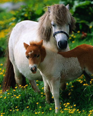 Pony Family Picture for Nokia C1-01