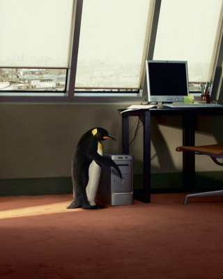 Penguin and Computer Picture for Nokia Asha 306