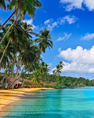 Caribbean Beach Background for Nokia Asha 311