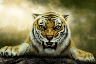 Angry Tiger HD Background for Android, iPhone and iPad