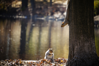 Squirrel At Lake Picture for Android, iPhone and iPad