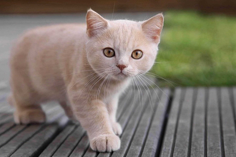 cat behavior secrets revealed português