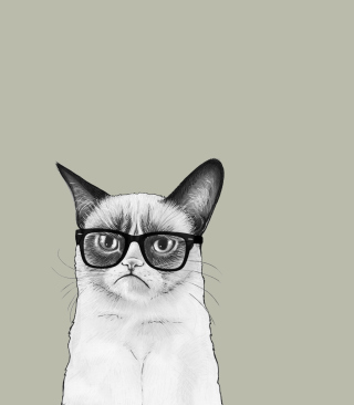 Free Grumpy Cat Picture for Nokia Asha 311