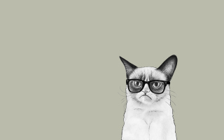 Grumpy Cat Wallpaper for Android 2560x1600