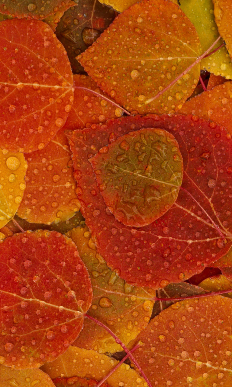 Screenshot №1 pro téma Autumn leaves with rain drops 768x1280