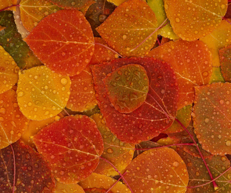 Screenshot №1 pro téma Autumn leaves with rain drops 960x800