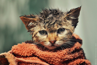 Cute Wet Kitty Cat After Having Shower sfondi gratuiti per cellulari Android, iPhone, iPad e desktop