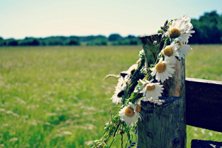 Daisy Wreath Wallpaper for HTC Desire HD