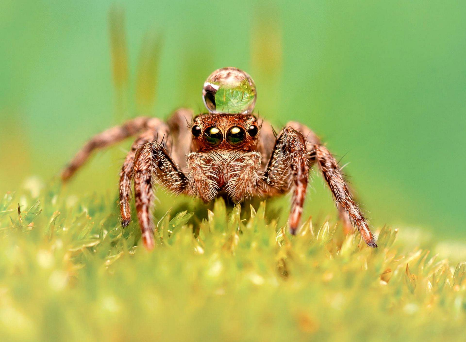 Настроения, смешные картинки с пауком