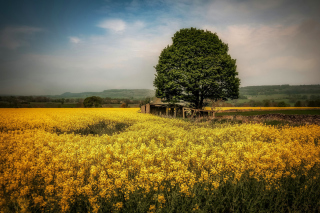 Field in Belarus Picture for Android, iPhone and iPad