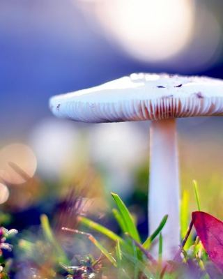 Mushroom Bokeh Background for HTC Titan