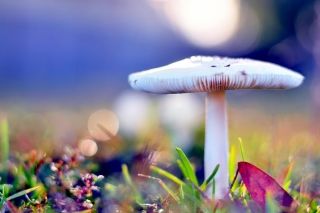 Free Mushroom Bokeh Picture for Android, iPhone and iPad