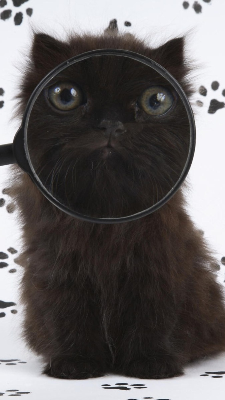 Cat And Magnifying Glass wallpaper 750x1334