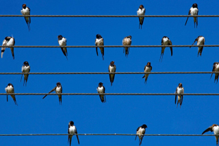 Birds On Wires Wallpaper for Android, iPhone and iPad
