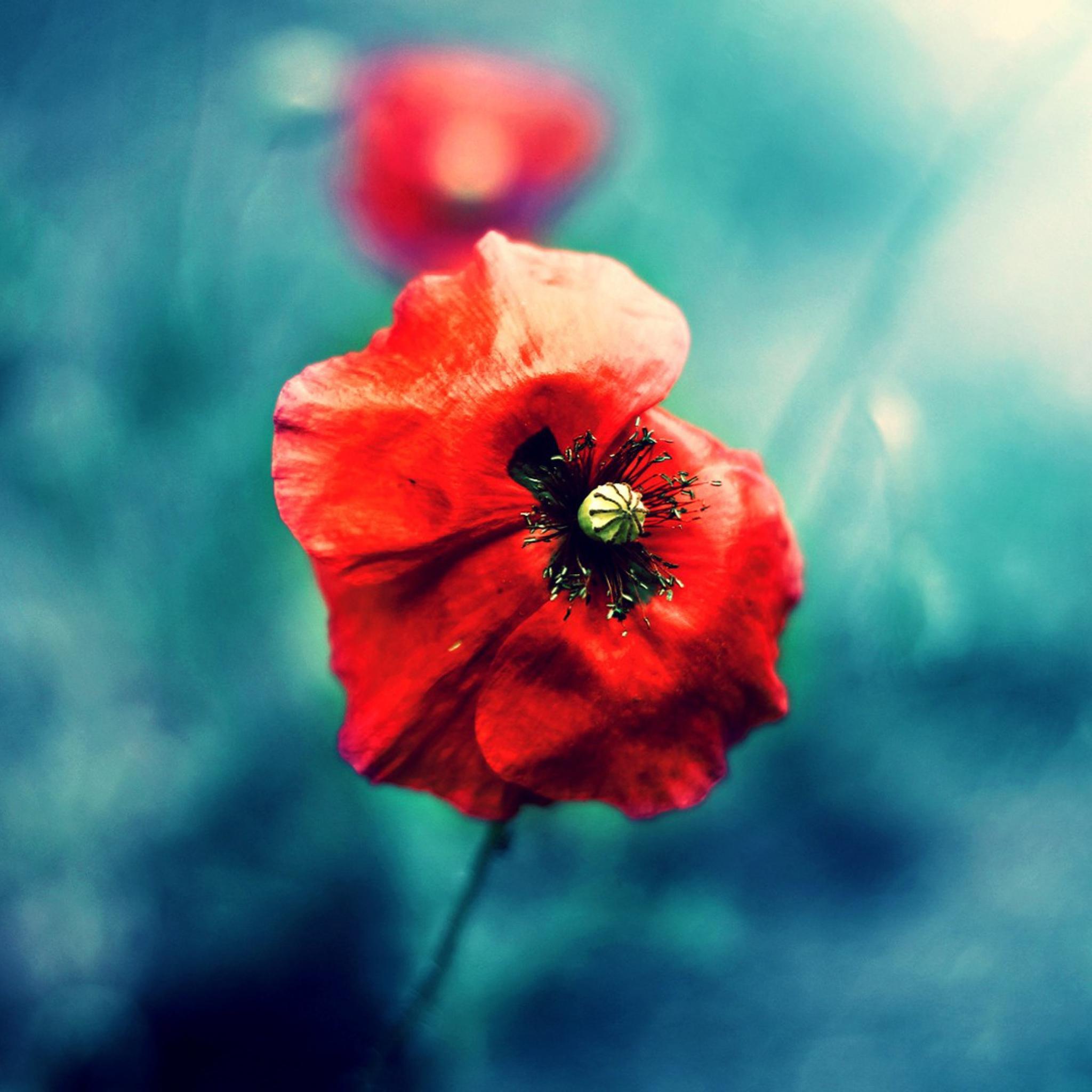 природа цветы красный скачать