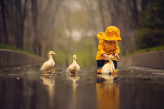 Goslings in Puddle Picture for Android, iPhone and iPad