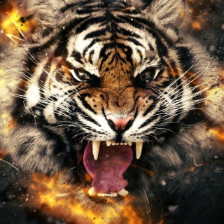 Free Fire Tiger Picture for 208x208