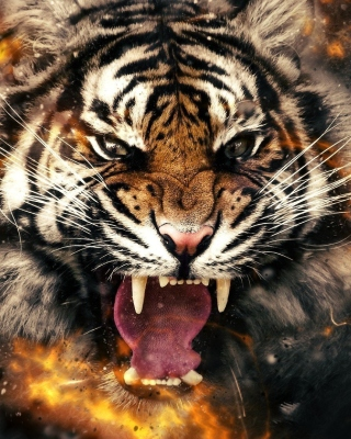Fire Tiger Picture for Nokia Asha 308