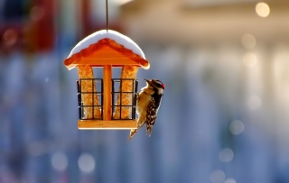 Winter Bird House Wallpaper for 1200x1024