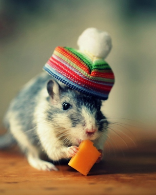 Kostenloses Mouse In Funny Little Hat Eating Cheese Wallpaper für Nokia X7
