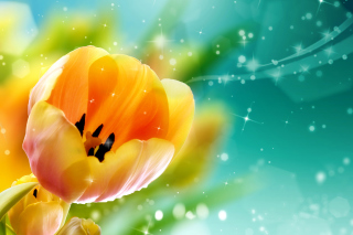 Bokeh Tulip Wallpaper for Android, iPhone and iPad
