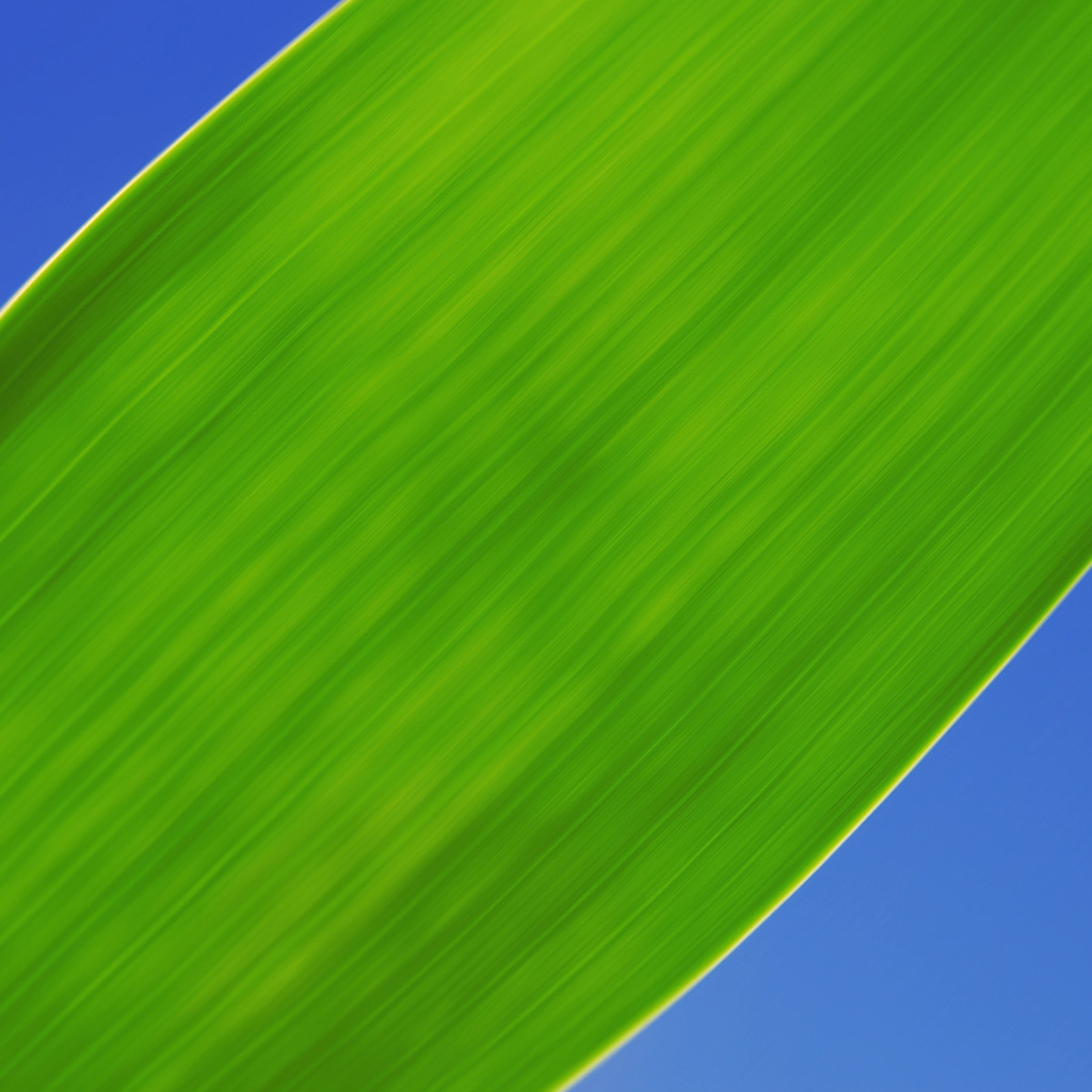 Screenshot №1 pro téma Green Grass Close Up 1024x1024