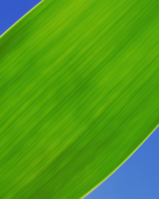 Free Green Grass Close Up Picture for Nokia X2