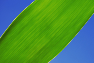 Free Green Grass Close Up Picture for Nokia XL