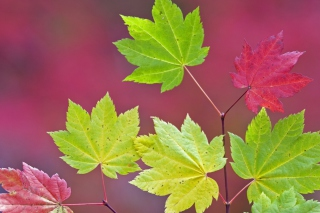 Close Up Leaves Picture for Android, iPhone and iPad