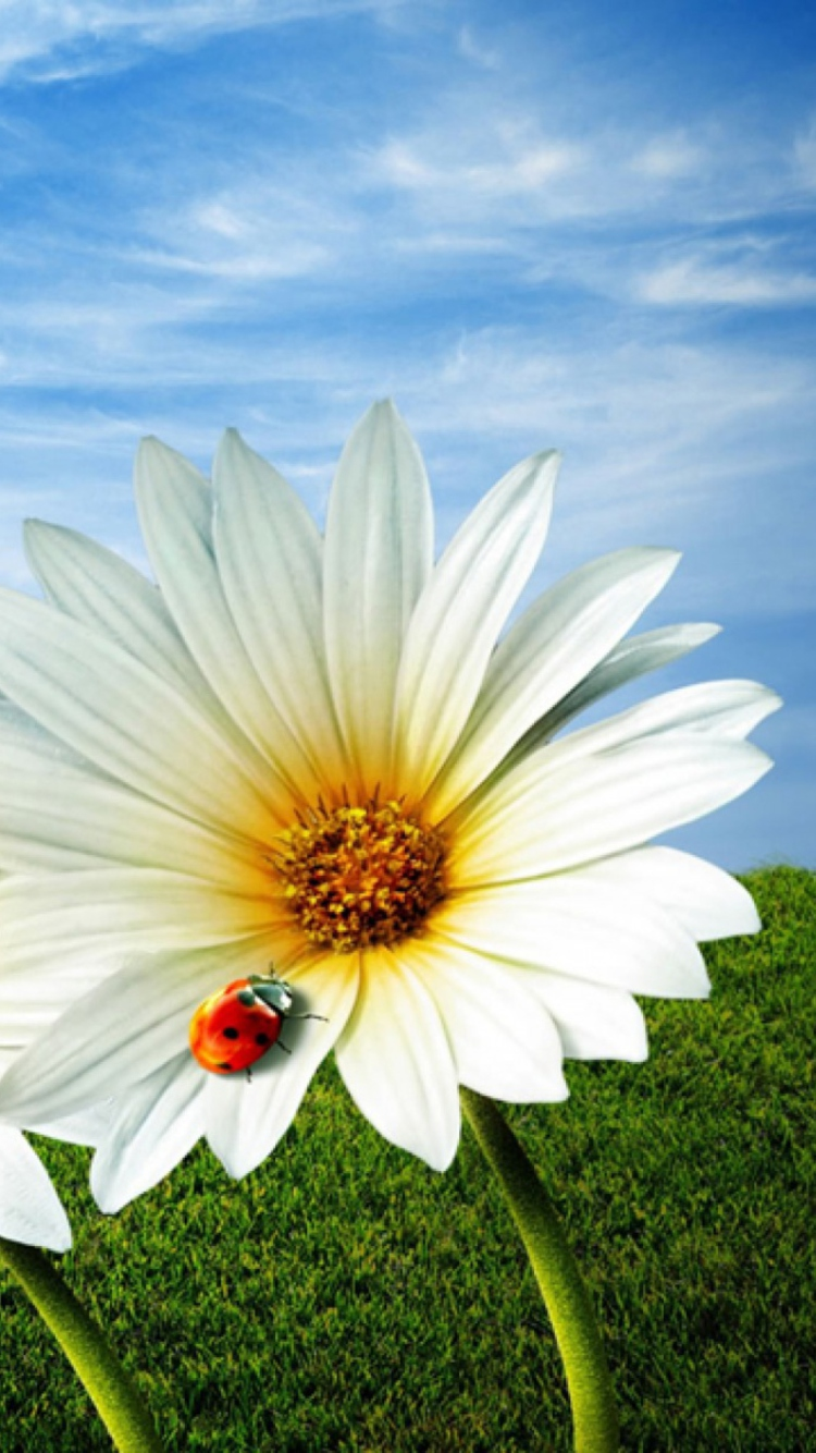 картинки цветы для аватарки ватсап бывшей церкви долгое