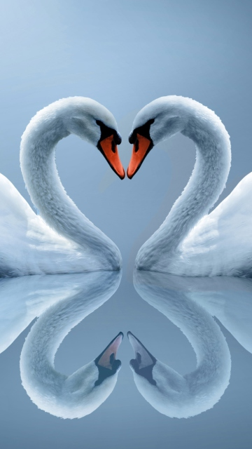 Swans Couple