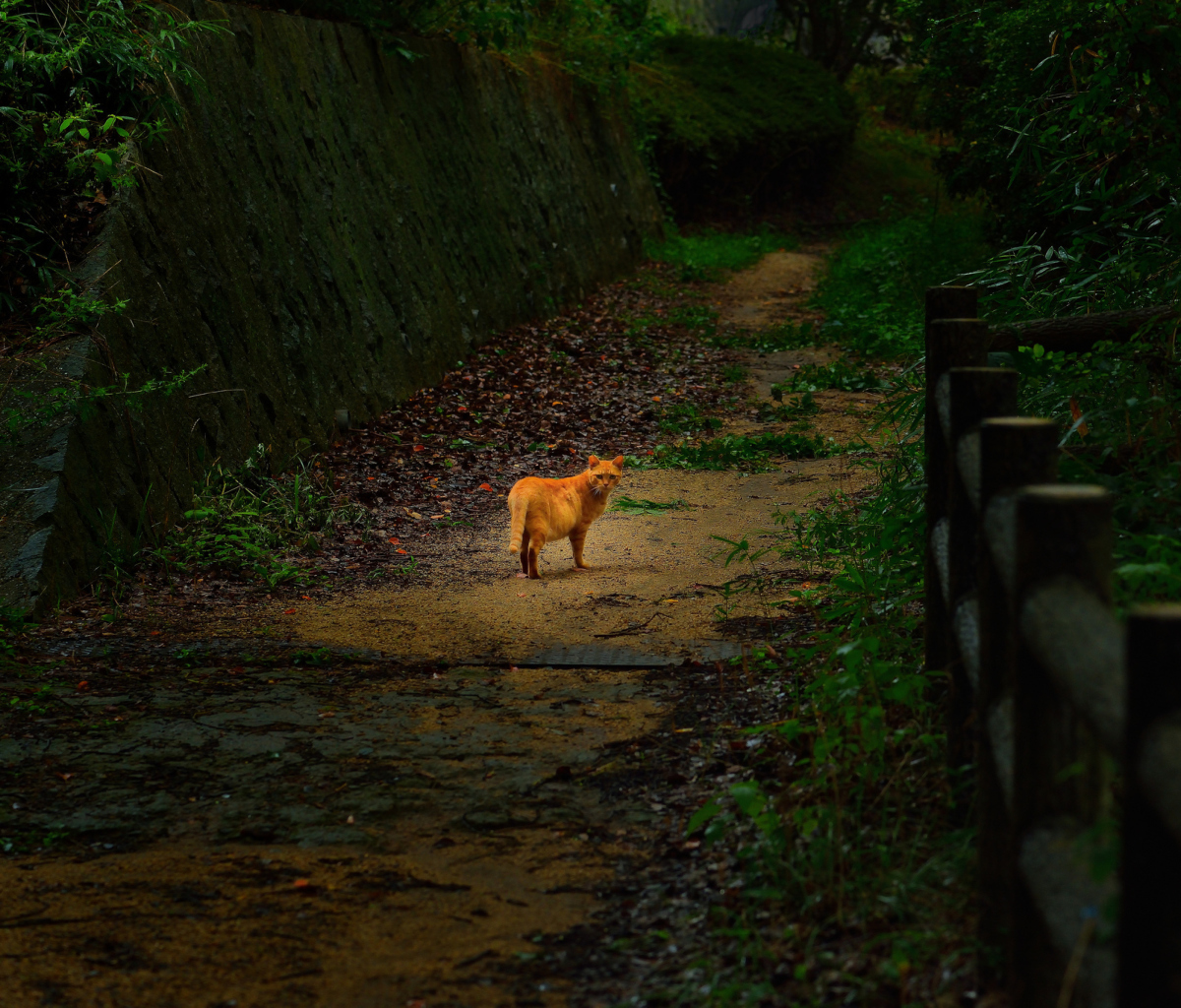 Screenshot №1 pro téma Golden Cat Walking In Forest 1200x1024