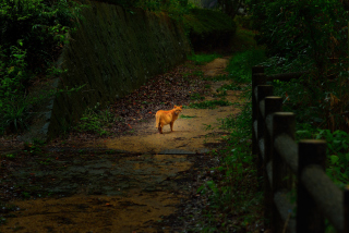 Kostenloses Golden Cat Walking In Forest Wallpaper für 1200x1024