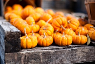 Cute Small Pumpkins Background for Android, iPhone and iPad