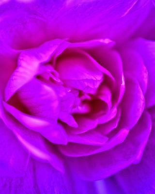 Purple Flower of Book Wallpaper for Nokia C5-06