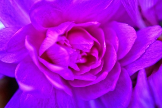 Purple Flower of Book Wallpaper for Android, iPhone and iPad