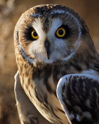 Owl Wallpaper for 128x160