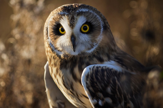 Owl Background for Android, iPhone and iPad