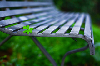 Little Green Leaf On Bench - Obrázkek zdarma