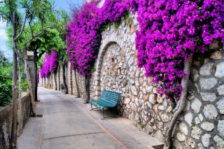 Iitaly flower street Background for Android, iPhone and iPad