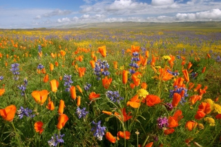 California Carrizo Plain Background for Android, iPhone and iPad