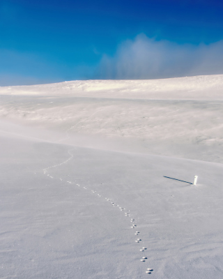 Kostenloses Footprints on snow field Wallpaper für 320x480